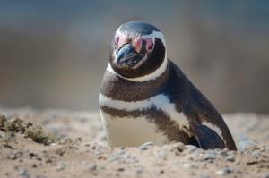 Content that Penguin Eats Up